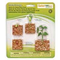 Life Cycle Of A Green Bean Plant Figures Safari Ltd NEW Toys Educational Toys