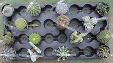 """jiimz 15 Assorted Cacti in their 2.5"""" pots  Item# 150"""