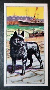SCHIPPERKE   Belgian Barge Dog    Original Vintage Card VGC