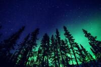 Northern Lights and Forest Photo Art Print Mural Poster 36x54 inch