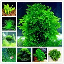 500Pcs Aquarium Grass Seed Bonsai Water Aquatic Plant Decorate Green Grass Decor