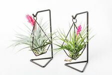 Plant gift,two sets tillandsia with diamond metal hanger with box,US free ship