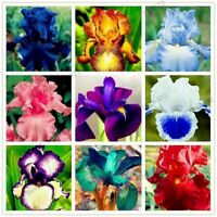 100pcs/bag Iris seeds Perennial garden flower seeds bonsai plant for outdoor var