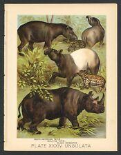 Tapir, Black Rhinoceros, Vintage 1897 Chromolithograph Print, Antique, 034