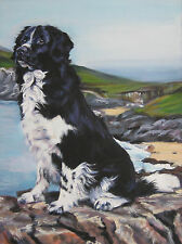Stabyhoun dog portrait art canvas Print of Lashepard painting 12x16""