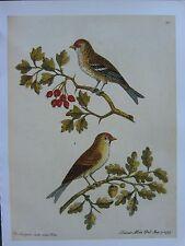 VINTAGE BIRD PRINT ~ THE RED ROLE COCK & HEN ~ ELEAZAR ALBIN