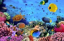 Wassertiere  KT480 Größe:400x280cm Meer Fisch Fototapete Tapete Korallen DEKO