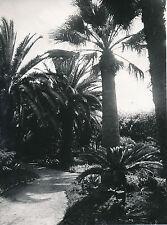 VÉGÉTAUX c. 1950 - Plantes Fleurs  Lot 100 Photos  - GL12