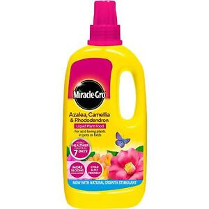 Miracle-Gro Azalea Camellia Rhododendron Concentrate Liquid Plant Flower Food 1L