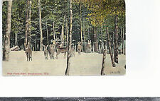 Rose Deer Park  Binghamton NY    Mailed 1910 Postcard 694