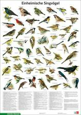 Einheimische Singvögel (1998, Poster)