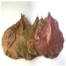 10-20 Almond Leaves Indian Leaf Shrimp Fish Care Make Water Food Form Thailand
