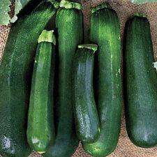 10 Squash Black Beauty Seeds