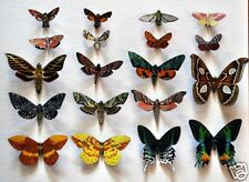 Butterfly Moth Magnets Set of 19 Multi Color Insects Reflections In Wildlife