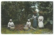 Scarce Cocoa Harvest Scene With Native Workers, Jamaica PPC, 1912 PMK to GB