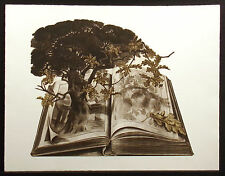 """Susan Jameson """"The Nature Book"""" Hand Signed Ltd Ed Etching by UK Artist, 1978"""
