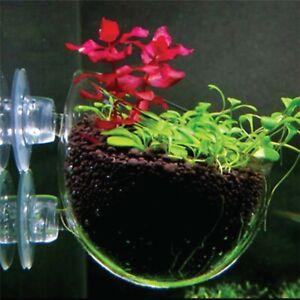 Mini Crystal Planting Glass Pot Cup Aquarium Fish Tank Decoration Accessories
