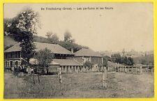 cpa RARE Ecrite en 1909 De TINCHEBRAY (Orne) Les PARFUMS et les FLEURS