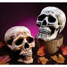 Effrayant Grandeur Nature Crâne Cimetière Cimetière Squelette