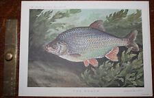 1962 The Roach ORIGINAL PRINT by Bernard VENABLES Angling Fishing Fresh Water