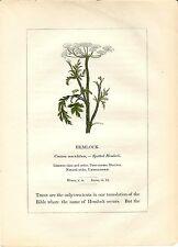 Stampa antica PIANTE DELLA BIBBIA CICUTA Conium maculatum 1842 Old antique print