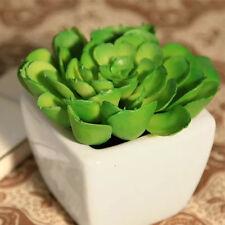 WELL 200PCS New Good Fast Grow Sempervivum Cactus Cold Hardy Seeds Succulents