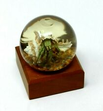 Nature Gems Crystal Vu Taxidermy ~ Hermit Crab ~ Artisan Original Preserved Work