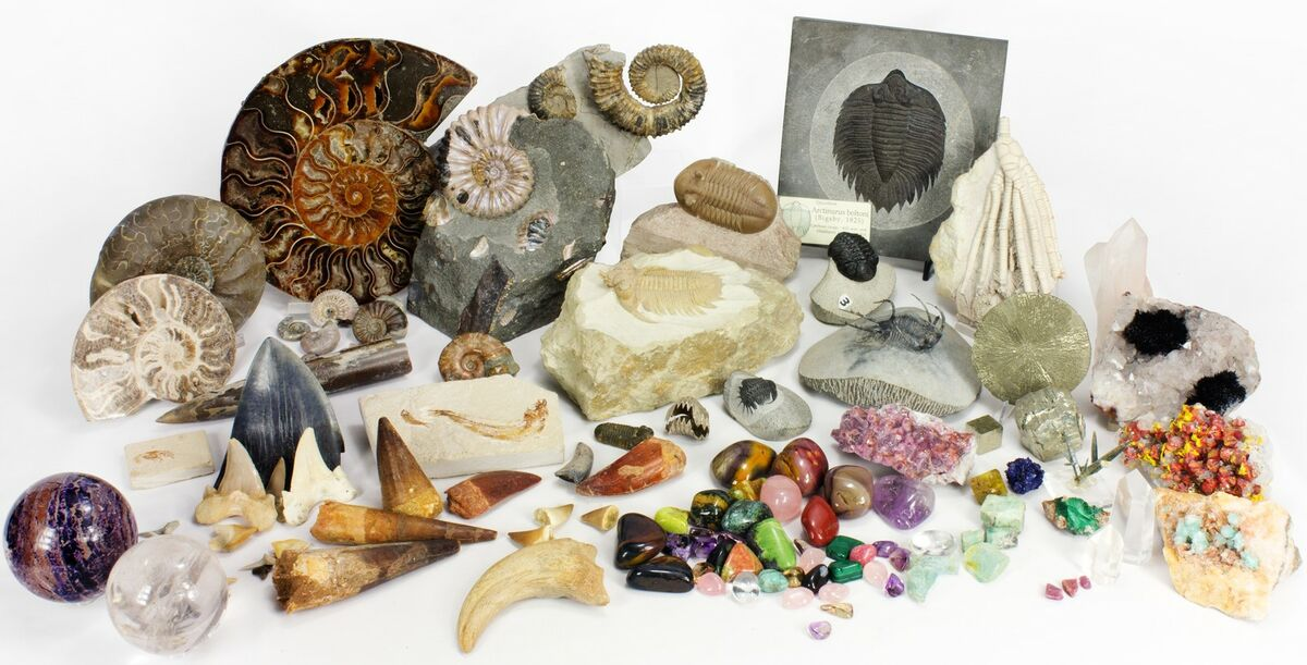 Fossils and minerals