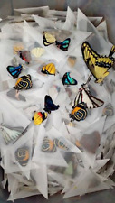 Lot of 10 Colorful A1 Tropical Butterfly Species - Unmounted