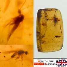 More details for x2 fly's and mosquito in cretaceous burmese amber fossil with 3d frame 1.15g*533