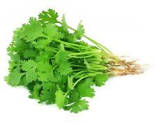 3300 Seeds Coriander Top Thailand Vegetables Food Health