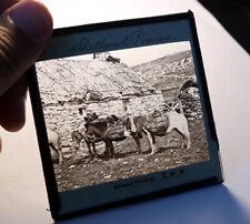 More details for shetland ponies, shetland isles scotland antique photo magic lantern slide #2047
