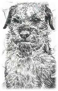 Limited Edition ACEO ATC Print Border Terrier Dog by Artist Claire Fisher