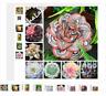 100 Garden Greenhouse Cactus Seed Rare Succulent Perennial Herb Plants,Bonsai