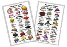 Nudibranch & Sea Slug Identification Card – Kangaroo Island