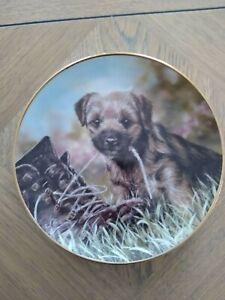 Danbury Mint Paul Doyle Dog Plate The Border Terrier - Bootiful No 1728