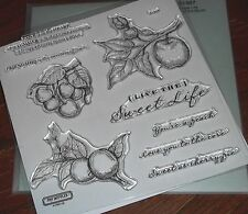 CTMH S1307 SWEET LIFE ~  APPLES, PEACHES, CHERRIES, ORCHARD