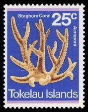 "TOKELAU 40 (SG40) - ""Acropora"" Staghorn Coral (pa34639)"