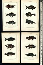 Fish Poissons rare c.1830's display collection 10 fine old hand colored prints