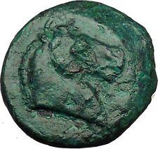 ANTIOCHUS I, SOTER Seleucid Possibly Unpublished Ancient Greek Coin i34351 HORSE