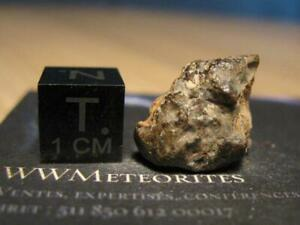 NWA 12460 - Eucrite : Brecciated magmatic rock with subophitic texture - LAST