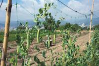 Verdelook rete per rampicanti Rampy mini rotoli 2x10 mt coltivazione ortaggi new
