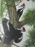 Bird Enthusiast Ornithology Habitat Species History Art Animal Vintage Lot