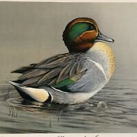 Artist J P Edwards LE Print Morning Stretch Idaho Ducks Unlimited Signed
