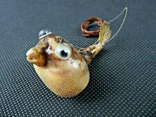Vintage small funny Globe Fish Taxidermy Animal Natural deco
