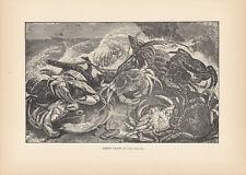 GREEN CRABS CRUSTACEANS CRABS ANTIQUE ART PRINT 1894