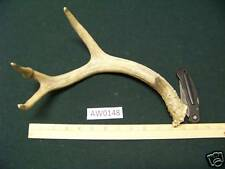 Whitetail Deer Antler use for Crafts, Knives AW0148