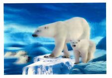 polar bear photography 3D Lenticular Holographic Stereoscopic Picture Wall Art