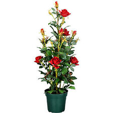 """35""""H Artificial Flower Rose In Pot Red - 56764RED"""