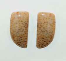 Petrified Palm wood 22x11mm with 4mm Dome set of 2 Cabochons from Texas (9790)